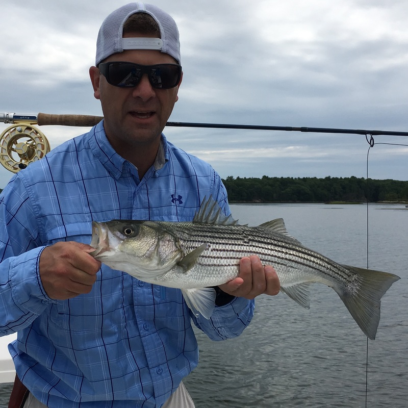 Striped bass portland maine saunders saltwater light for Portland fishing guides